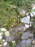 Χλόη και πέτρες Στοκ φωτογραφία με δικαίωμα ελεύθερης χρήσης