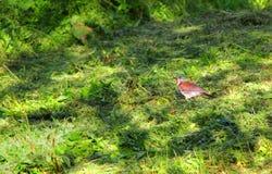 Χλόη και πουλί Στοκ φωτογραφία με δικαίωμα ελεύθερης χρήσης