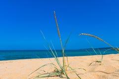 Χλόη κινηματογραφήσεων σε πρώτο πλάνο σε μια παραλία αμμόλοφων άμμου, έναν μπλε ωκεανό και έναν ουρανό στο backg Στοκ Φωτογραφία