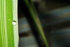 Χλόη με τις άσπρες λουρίδες και μια ρέοντας διαφανή πτώση του νερού Μακροεντολή Στοκ Εικόνες