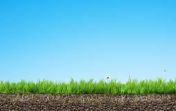 Χλόη με τις ρίζες και το χώμα απεικόνιση αποθεμάτων