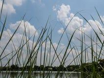 Χλόη με το μπλε ουρανό Στοκ φωτογραφίες με δικαίωμα ελεύθερης χρήσης