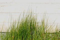 Χλόη μπροστά από το τουβλότοιχο Στοκ Φωτογραφία