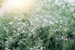 Χλόη λουλουδιών Στοκ Εικόνες