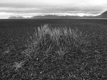Χλόη παραλιών στην Ισλανδία Στοκ Εικόνα