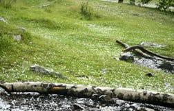 Χλόη που καλύπτεται στις σφαίρες πάγου μετά από τη θύελλα χαλαζιού Στοκ εικόνα με δικαίωμα ελεύθερης χρήσης
