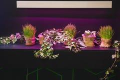 Χλόη πράσινη με τα λουλούδια στο βάθρο Στοκ Εικόνες