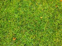 Χλόη Πράσινος η χλόη ανασκόπησης απομόνωσε το λευκό Φυσική πράσινη σύσταση χλόης, φυσικό πράσινο υπόβαθρο χλόης για το σχέδιο με  Στοκ Εικόνες