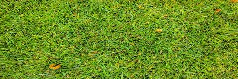 Χλόη Πράσινος η χλόη ανασκόπησης απομόνωσε το λευκό Φυσική πράσινη σύσταση χλόης, φυσικό πράσινο υπόβαθρο χλόης για το σχέδιο με  Στοκ Φωτογραφία