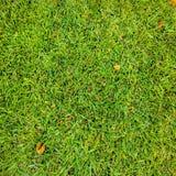 Χλόη Πράσινος η χλόη ανασκόπησης απομόνωσε το λευκό Φυσική πράσινη σύσταση χλόης, φυσικό πράσινο υπόβαθρο χλόης για το σχέδιο με  Στοκ εικόνες με δικαίωμα ελεύθερης χρήσης