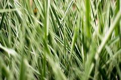 Χλόη σε μια λουρίδα διάφορων χρωμάτων, πράσινος, ανοικτό πράσινο, άσπρων Στοκ Εικόνα