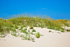 Χλόη σε μια παραλία κατά τη διάρκεια θυελλώδους στοκ φωτογραφία με δικαίωμα ελεύθερης χρήσης