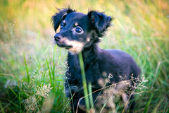 χλόη σκυλιών λίγα Στοκ φωτογραφίες με δικαίωμα ελεύθερης χρήσης