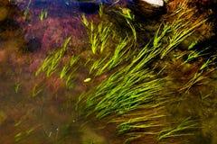 Χλόη στον τοπικό ποταμό Στοκ φωτογραφία με δικαίωμα ελεύθερης χρήσης