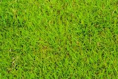 Χλόη στο γήπεδο του γκολφ Στοκ εικόνα με δικαίωμα ελεύθερης χρήσης