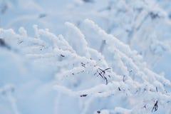 Χλόη στο χιόνι σε έναν τομέα ενάντια στον ήλιο ρύθμισης ευγενές ηλιοβασίλεμα το χειμώνα Στοκ εικόνα με δικαίωμα ελεύθερης χρήσης