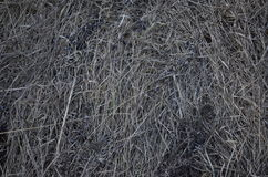 Χλόη Φεβρουαρίου Στοκ Εικόνα