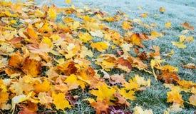 Χλόη φθινοπώρου/χειμώνα που καλύπτεται στην πάχνη ξημερωμάτων Στοκ Εικόνες