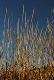 χλόη ψηλή Στοκ εικόνες με δικαίωμα ελεύθερης χρήσης