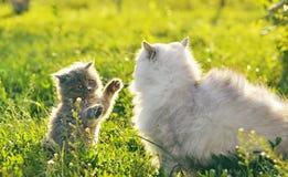 χλόη δύο γατών Στοκ Φωτογραφίες
