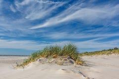 Χλόη Gree στην άσπρη παραλία άμμου στοκ φωτογραφίες με δικαίωμα ελεύθερης χρήσης