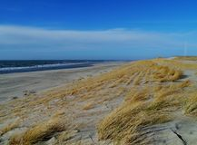 Χλόη Maram στους αμμόλοφους των Κάτω Χωρών Στοκ φωτογραφίες με δικαίωμα ελεύθερης χρήσης
