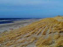 Χλόη Maram στους αμμόλοφους των Κάτω Χωρών Στοκ εικόνες με δικαίωμα ελεύθερης χρήσης
