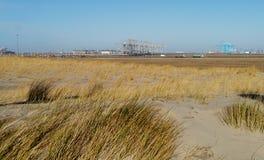 Χλόη Maram στους αμμόλοφους των Κάτω Χωρών Στοκ Φωτογραφίες