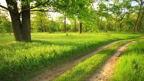 Χλόη Rustles αερακιού αέρα και κλάδοι της βαλανιδιάς Όμορφο θερινό πράσινο δάσος και Δρόμος επαρχίας στην ηλιόλουστη ημέρα απόθεμα βίντεο