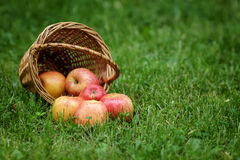 Ψάθινο σύνολο καλαθιών των μήλων gala Στοκ εικόνα με δικαίωμα ελεύθερης χρήσης