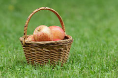 Ψάθινο σύνολο καλαθιών των μήλων gala Στοκ Φωτογραφίες