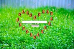Ψάξτε την καρδιά σας Στοκ φωτογραφία με δικαίωμα ελεύθερης χρήσης