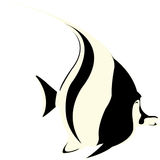 ψάρια αγγέλου Ελεύθερη απεικόνιση δικαιώματος