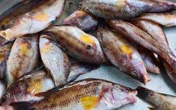 ψάρια ακατέργαστα στοκ φωτογραφίες