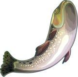 ψάρια από τη θάλασσαα Διανυσματική απεικόνιση