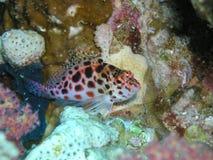 ψάρια αστεία Στοκ Φωτογραφίες