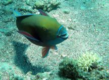 ψάρια αστεία Στοκ φωτογραφίες με δικαίωμα ελεύθερης χρήσης