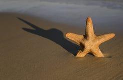 Ψάρια αστεριών σε μια παραλία Στοκ φωτογραφία με δικαίωμα ελεύθερης χρήσης