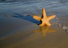 Ψάρια αστεριών σε μια παραλία Στοκ Φωτογραφίες