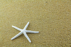 Ψάρια αστεριών στην άμμο Στοκ Φωτογραφία