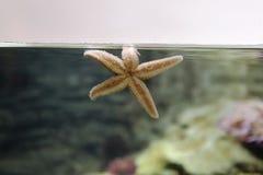 Ψάρια αστεριών όταν διαφυγή Στοκ φωτογραφίες με δικαίωμα ελεύθερης χρήσης