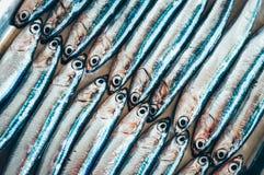 Ψάρια αφηρημένο †«δύο σειρές των ψαριών στοκ εικόνα με δικαίωμα ελεύθερης χρήσης