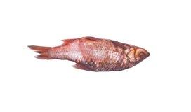 ψάρια αλμυρά Στοκ φωτογραφία με δικαίωμα ελεύθερης χρήσης