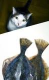 ψάρια γατών Στοκ φωτογραφία με δικαίωμα ελεύθερης χρήσης