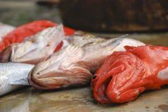 Ψάρια για την πώληση στα νησιά Andaman Στοκ εικόνα με δικαίωμα ελεύθερης χρήσης