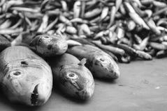 Ψάρια για την πώληση στα νησιά Andaman Στοκ Φωτογραφίες