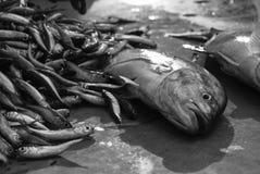 Ψάρια για την πώληση στα νησιά Andaman Στοκ φωτογραφία με δικαίωμα ελεύθερης χρήσης