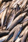 Ψάρια για την πώληση στην αγορά Στοκ εικόνες με δικαίωμα ελεύθερης χρήσης