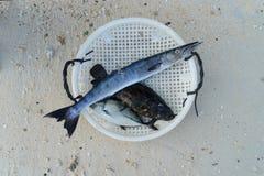 Ψάρια για το γεύμα από τη θάλασσα Στοκ Εικόνα