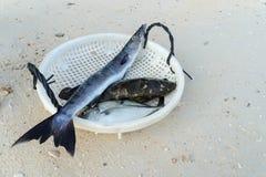 Ψάρια για το γεύμα από τη θάλασσα Στοκ φωτογραφία με δικαίωμα ελεύθερης χρήσης